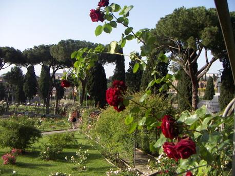 rome rose 6