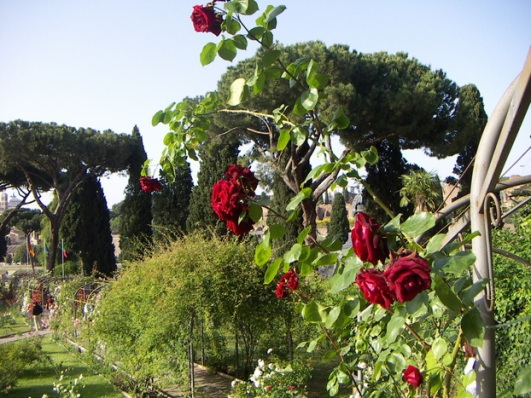rose rome 3.jpg